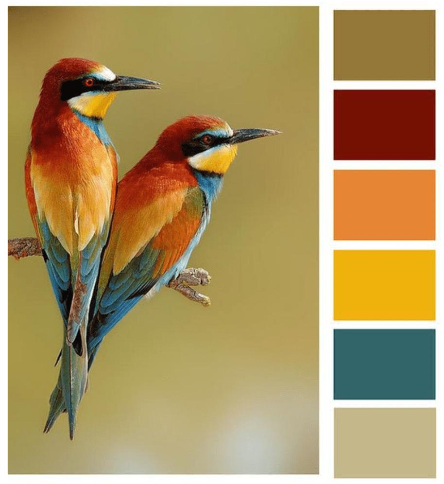 colori della natura